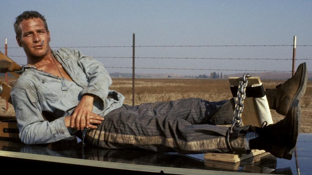 Cool Hand Luke Paul Newman